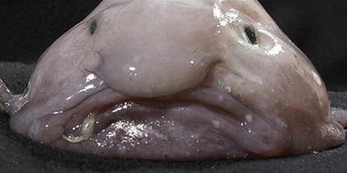醜い生き物